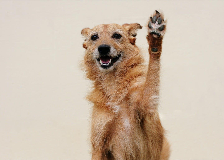 子犬を迎えたら始めたい!愛犬の「社会化しつけ」の基本とは?