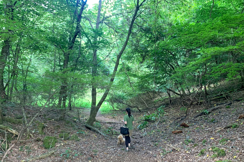 樹海をお散歩