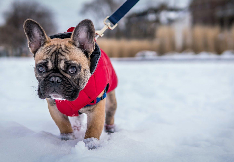雪の中で散歩する犬