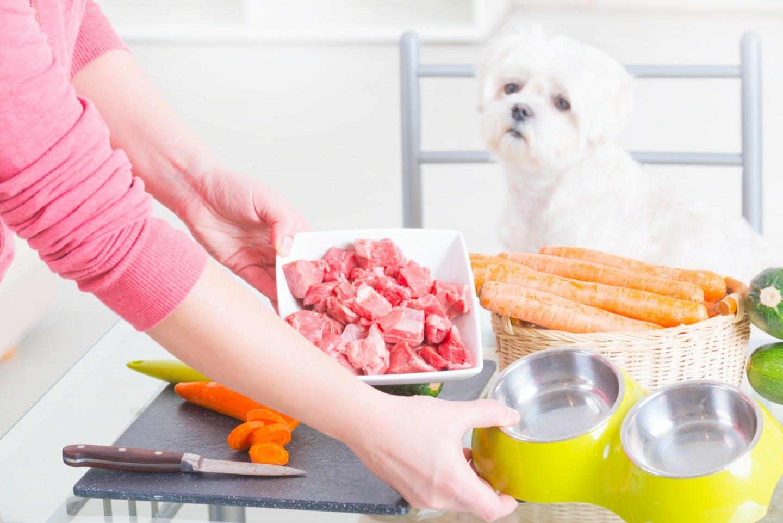 犬に生肉は与えてもいいの?馬肉・猪肉などの珍しい肉類はOK?