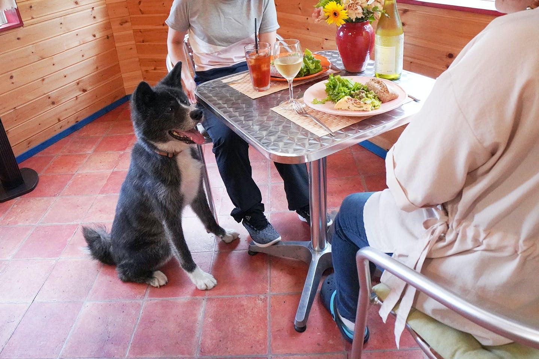 お店の看板犬