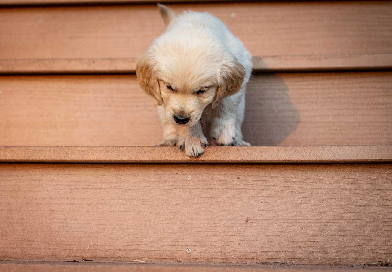 階段の上の犬