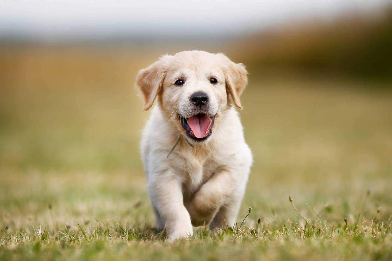 愛犬の健康寿命を延ばすため!清潔と健康を保つ7つのお手入れ習慣
