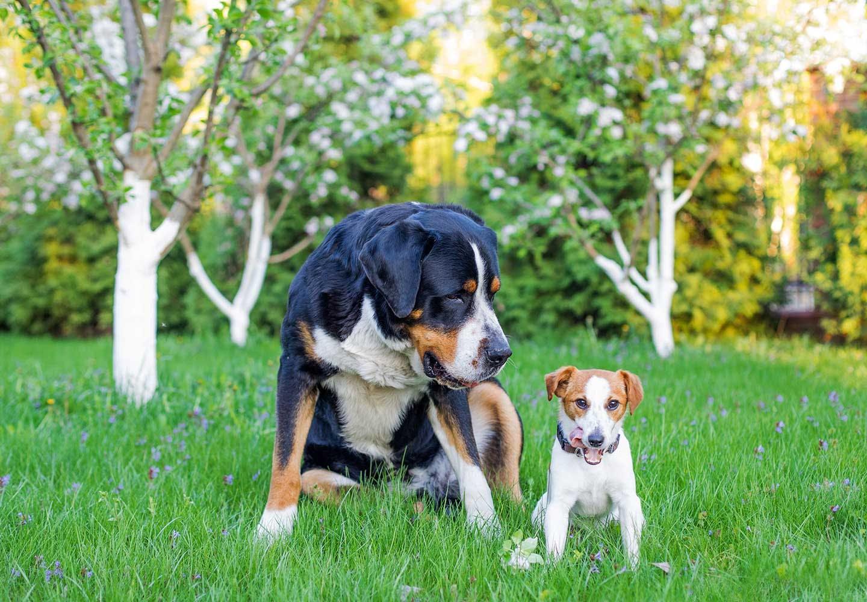 成犬と子犬