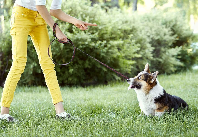 散歩中の犬と飼い主