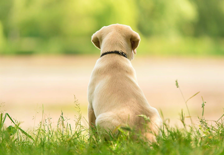 【獣医師監修】犬の椎間板ヘルニアの症状とは?原因や治療法、日常生活でのケアや予防法などについて解説