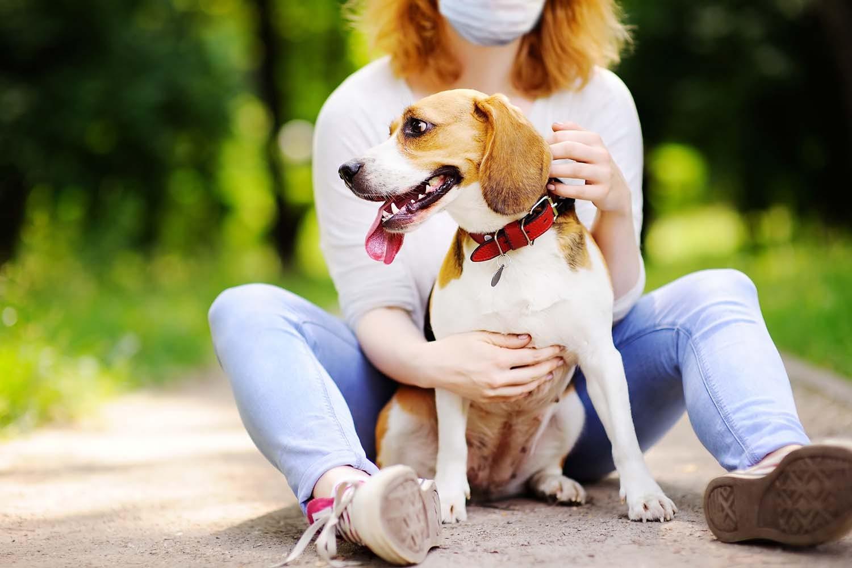 人だけでなく、犬も新しい生活様式に!?コロナ以降のわんちゃんとの日常で気をつけるべきことは?