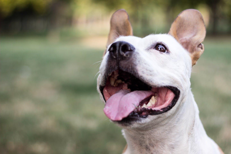 【獣医師監修】犬の口臭や口内炎は病気のサイン? 考えられる病気は