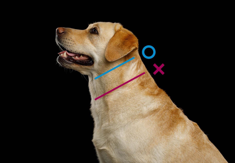 犬の散歩の適切な回数と距離は?時間やマナー、散歩デビューの基礎知識について解説【獣医師監修】