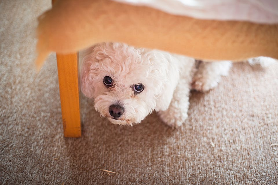 犬が台風を怖がっているときどうすれば?ベストな対応を動物行動学の専門家に聞いてみた!