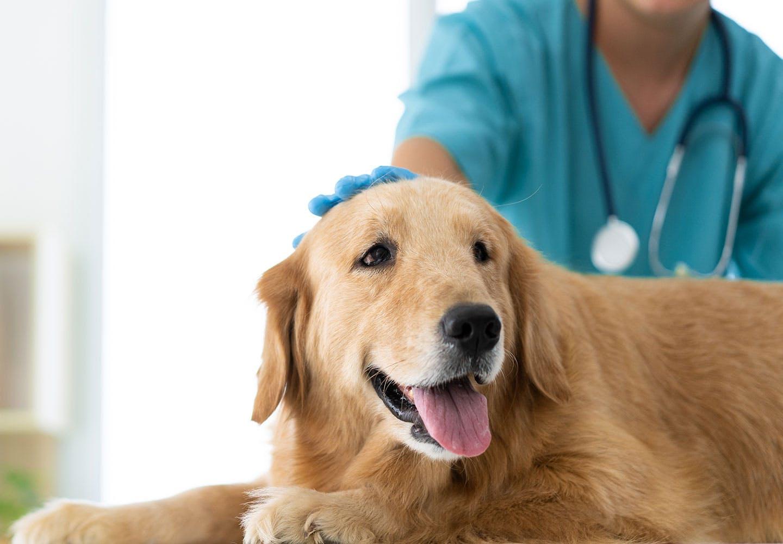 【獣医師監修】犬も献血できる!?愛犬をドナー登録して救える命を増やそう!