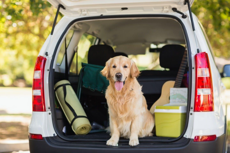 災害時に愛犬と飼い主さんを守る!車に備えておきたいグッズとは