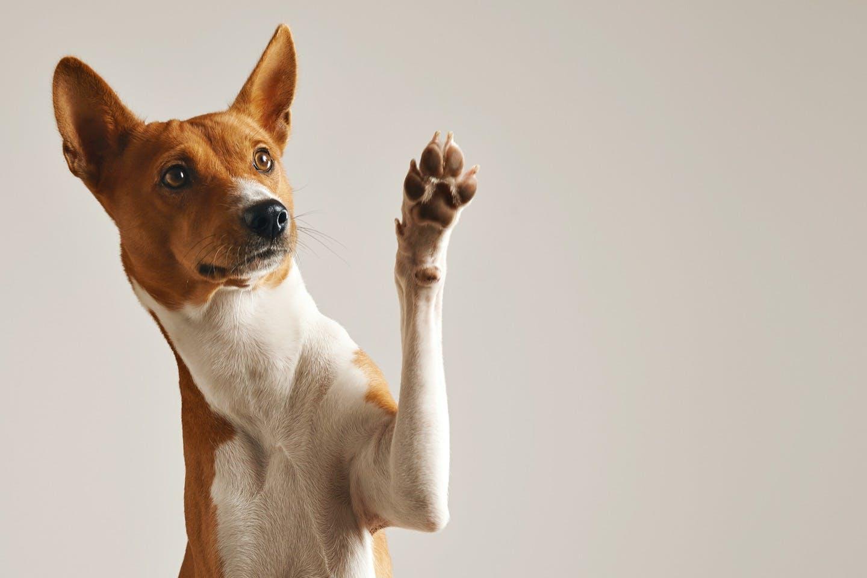 ケガを予防する!犬の足の裏の毛のバリカンカット方法や注意点とは