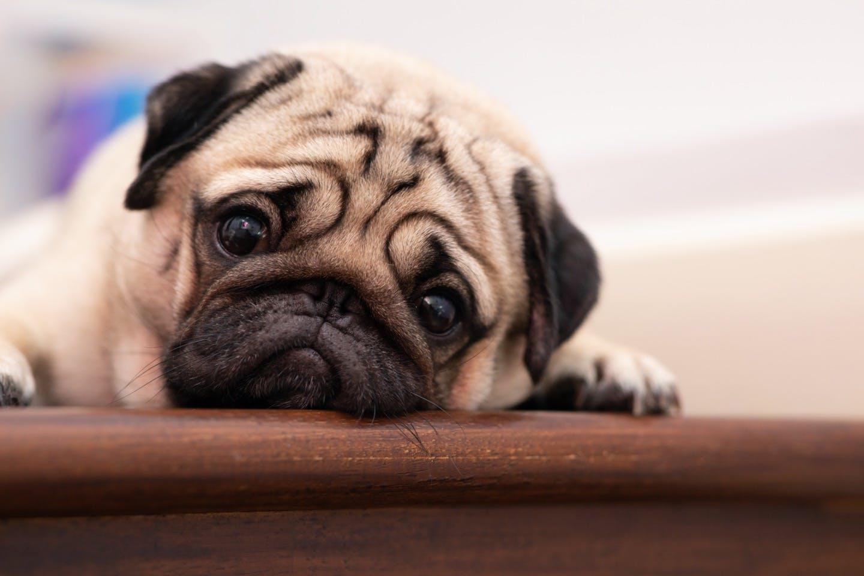 """""""しつけ""""は防災対策のひとつ!愛犬を守るために教えておきたいこと"""
