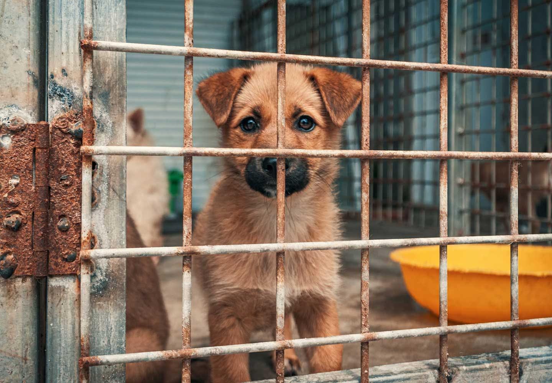 犬の殺処分がなくならない理由とは?殺処分ゼロのために私たちにできることを考えよう!