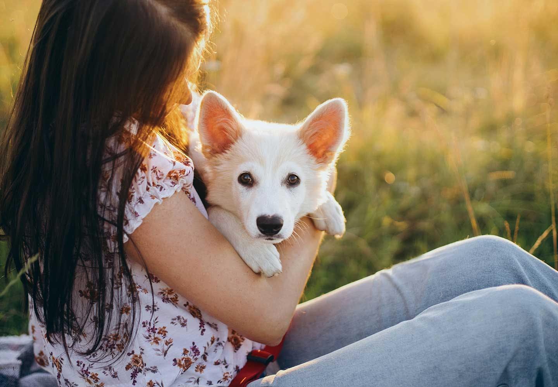 【獣医師監修】犬の正しい抱っこの仕方とは?メリットや嫌がられない方法を解説