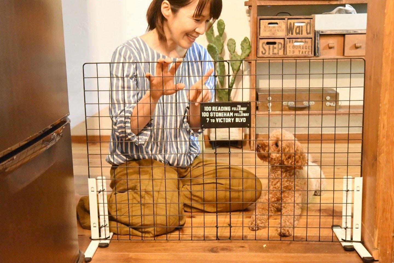 【10分で完成】100均アイテムで愛犬の「簡易ペットゲート」を作ろう!