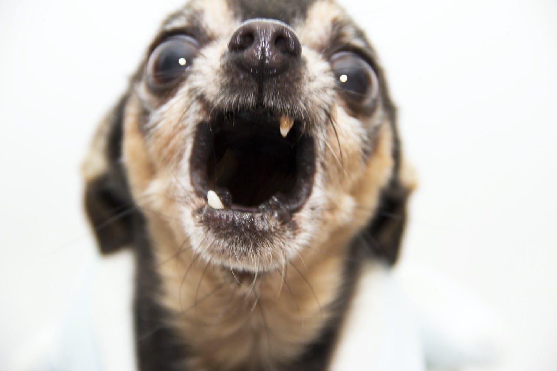 愛犬のその行動、もしかして反抗期? 原因や起こる時期・対処法は?