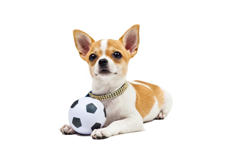 愛犬とボール遊びをしよう!おすすめのボール遊びをご紹介