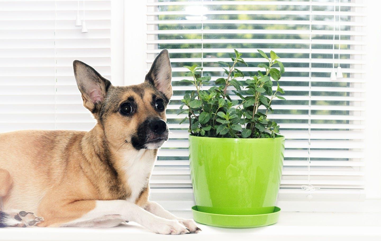 話題の野菜やおしゃれなハーブ類……犬に与えても大丈夫?