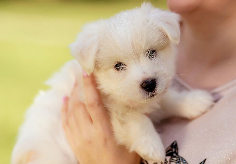 抱っこされる子犬