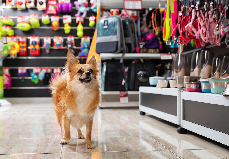 ペットショップにいる犬