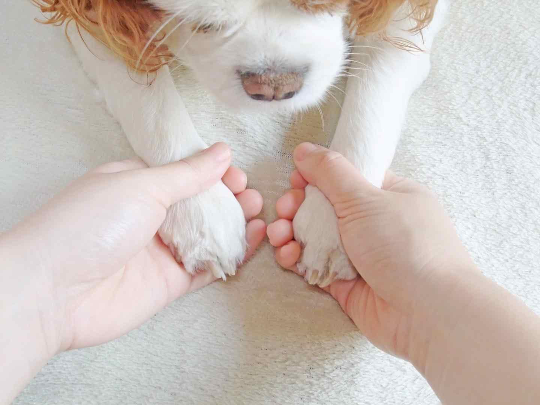 手を触られる犬