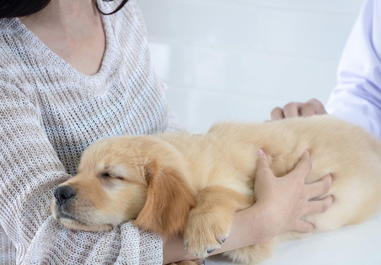 犬と動物病院