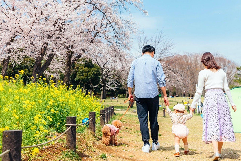 【わんこと暮らす家】ナチュラルで統一感のある北欧風リビング 家族で犬と出かける佐々木さん