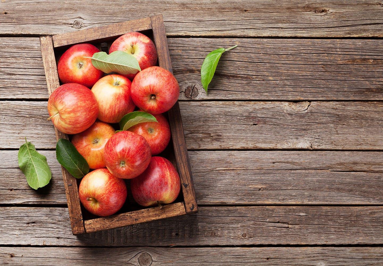 【獣医師監修】犬にりんごを食べさせても大丈夫?適量や与えるメリット、注意点やアレルギーについて解説