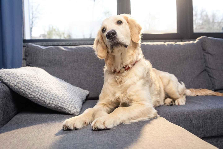 万が一に備えて!災害時に愛犬と同行避難するために知っておいてほしいこと