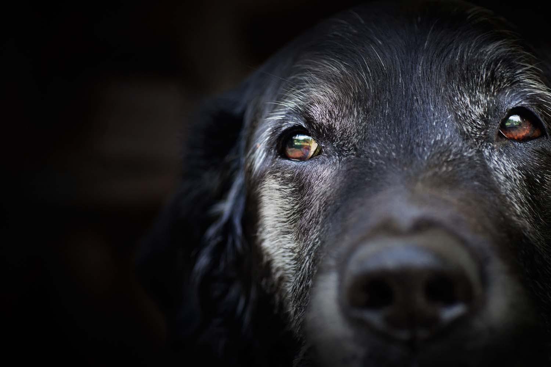 目のまわりが黒い犬