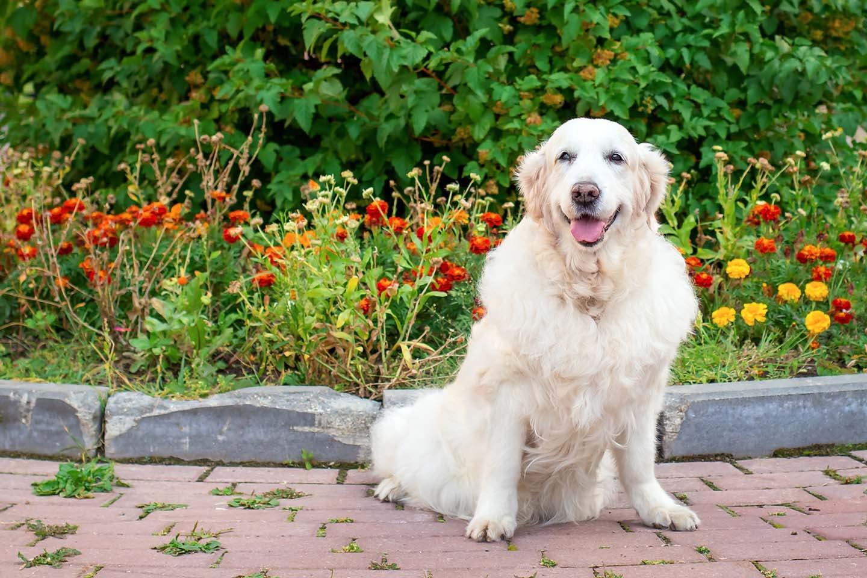 前足で立つ老犬