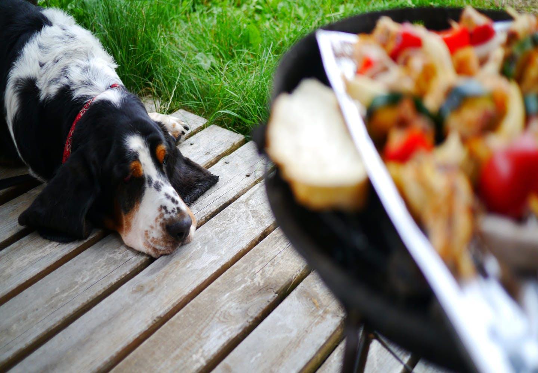 食事を見つめる犬