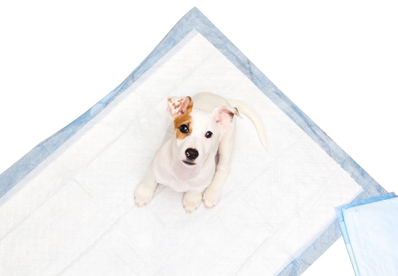 【獣医師監修】犬の血尿の原因とは?病気のサインと原因別の対処法について解説