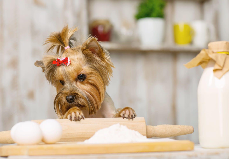 調理風景を覗く犬