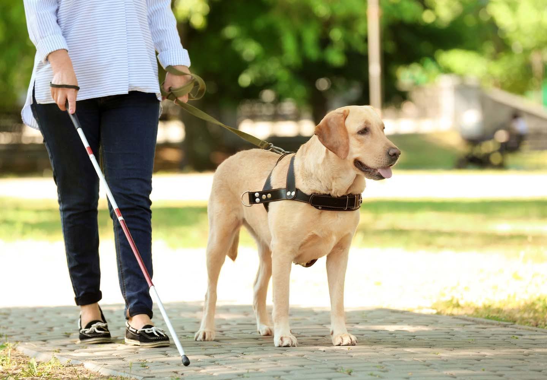 補助犬ってどんな犬?種類や仕事、訓練など基礎知識を解説!