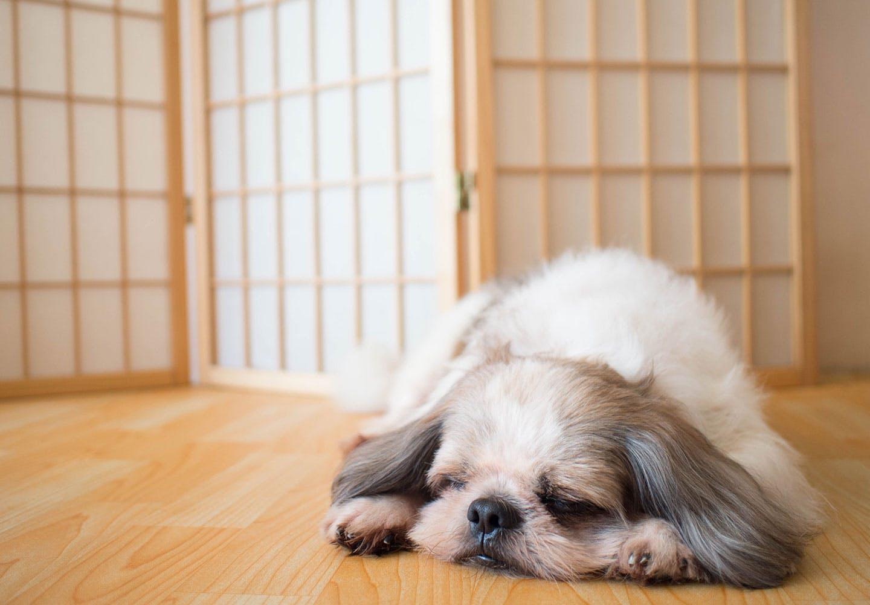【獣医師監修】犬の便秘は病気のサイン?病院に連れて聞くべき症状や対処法、マッサージなどでの予防について解説