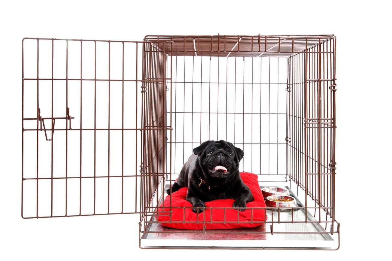 【獣医師監修】犬にケージが必要な理由とは?メリットや使用するときの注意点、商品の選び方について解説