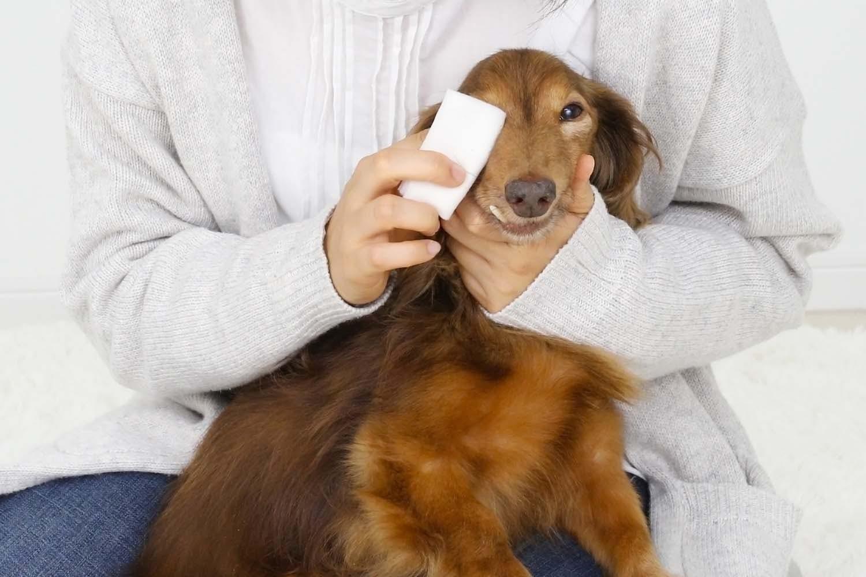 ホットタオルでふやかして犬の目やにを取り除く