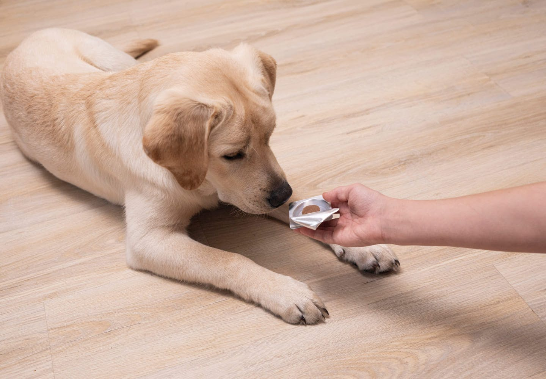 薬を与えられる犬