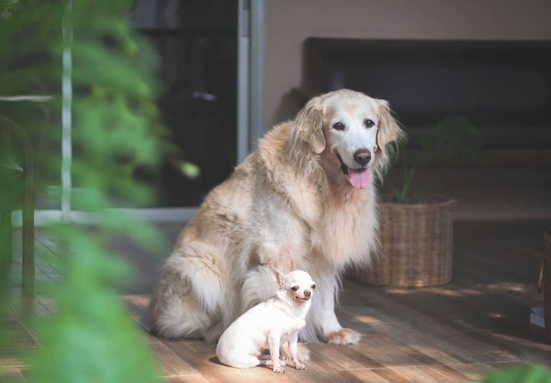 家の中にいる犬