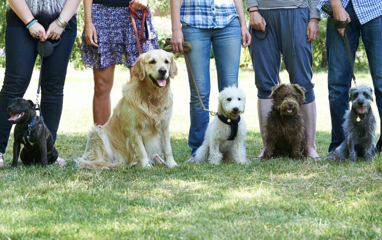 飼い主と犬が集まっている