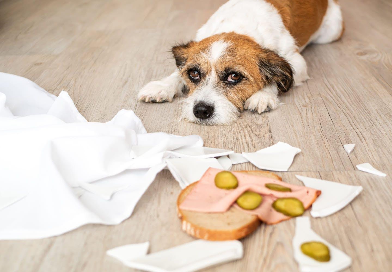寝そべる犬とパン