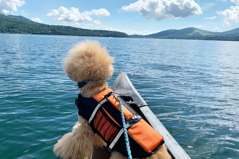 カヌーに乗るトイプードルのネネ