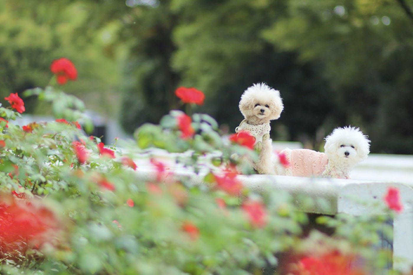 【代々木公園】愛犬とお出かけ♪ドッグランだけじゃないフォトジェニックな代々木公園