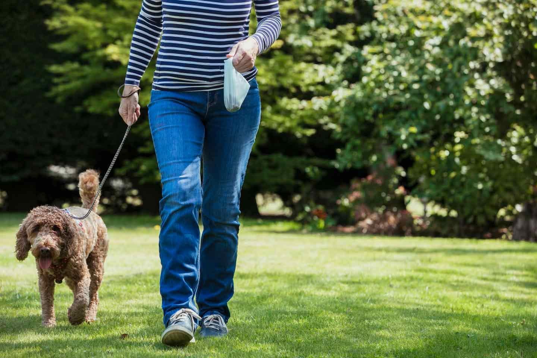 芝生で散歩する犬