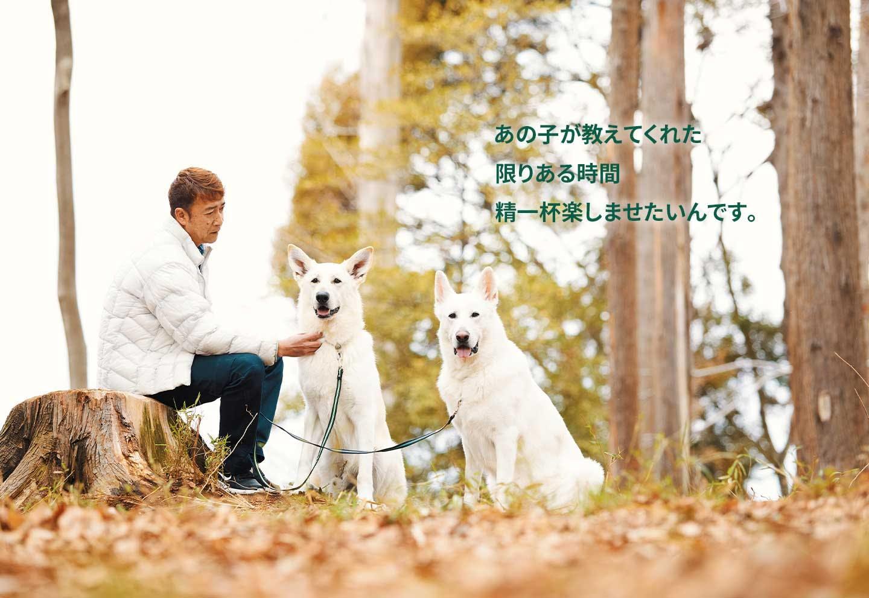 愛犬家の一日《WanScene104》Natsuパパさん&ナツ・心(ホワイトシェパード)