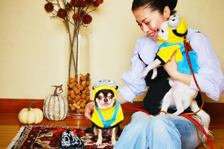 「ミートケーキ」 手軽におうちハロウィン 愛犬手作りごはんレシピ 仮装