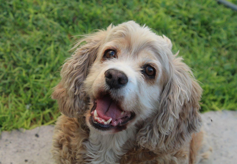 【獣医師監修】犬がしゃっくりをする原因は?飼い主ができる対処法と病気の可能性、病院へ行くべき症状などについて解説